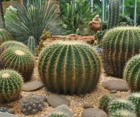 Cactus Stock Photo 01