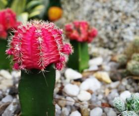Cactus Stock Photo 02