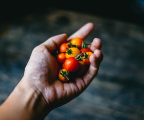 Closeup woman hand holding tiny tomatoes Stock Photo
