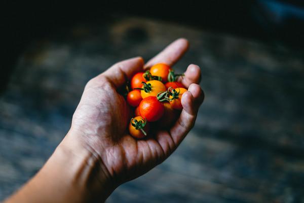 Closeup woman hand holding tiny tomatoes Stock Photo