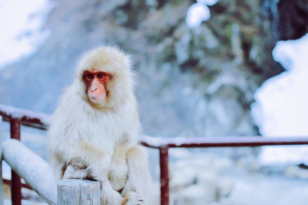 Cute hairy monkey Stock Photo