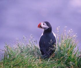 Cute wild bird on grass Stock Photo