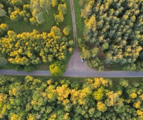 Empty road in yellow flowers park from height Stock Photo