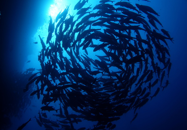 Flock of fish in the sea Stock Photo 09