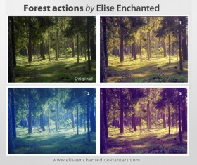 Forest Photoshop Action