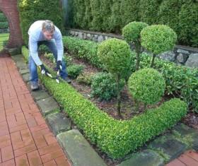 Gardener trimming plants Stock Photo