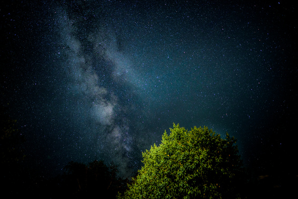 Green tree under sparkling starry sky Stock Photo