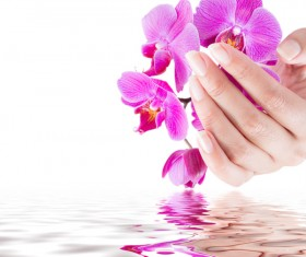 Hand holding flower Stock Photo 01