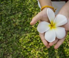 Hand holding flower Stock Photo 02