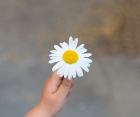 Hand holding flower Stock Photo 03