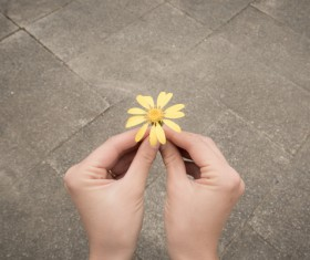 Hand holding flower Stock Photo 04