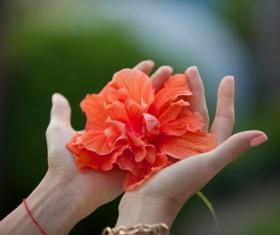 Hand holding flower Stock Photo 07