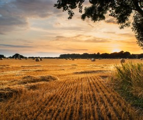Haystacks in farmland Stock Photo 03
