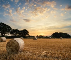Haystacks in farmland Stock Photo 04