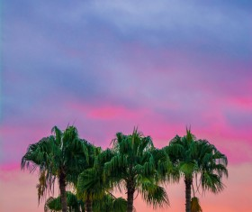 High coconut trees under dusk sky Stock Photo