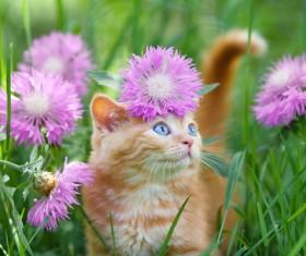 Kitten and flower Stock Photo