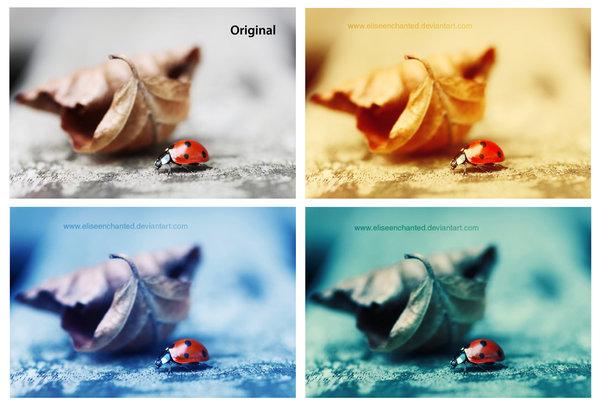 Ladybug Photoshop Actions