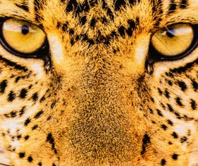 Leopard print Stock Photo 04