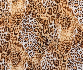 Leopard print Stock Photo 05