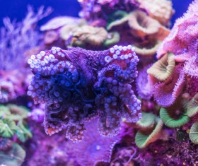 Ocean underwater world coral reef tropical fish Stock Photo 01