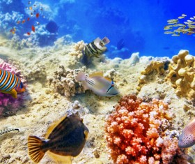 Ocean underwater world coral reef tropical fish Stock Photo 02
