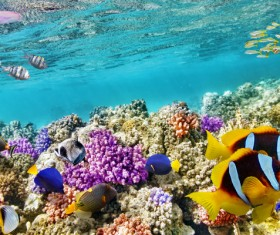 Ocean underwater world coral reef tropical fish Stock Photo 03