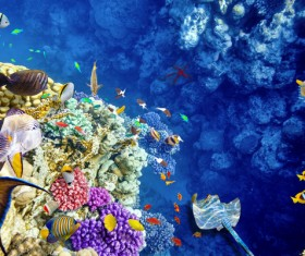 Ocean underwater world coral reef tropical fish Stock Photo 04