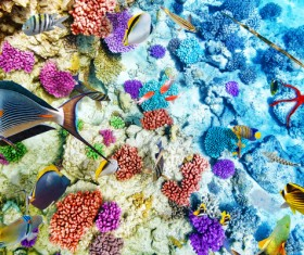 Ocean underwater world coral reef tropical fish Stock Photo 05