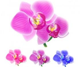 Orchid petals illustration vectors 02