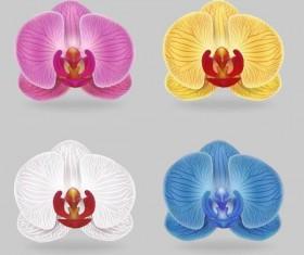 Orchid petals illustration vectors 03