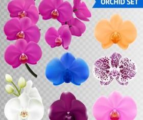 Orchid petals illustration vectors 04