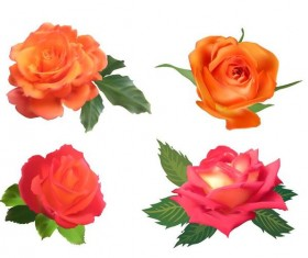 Orname with pink rose illustration vector