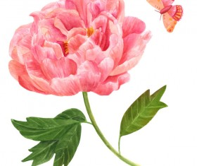 Peony watercolor hand drawn vector