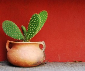 Potted cactus Stock Photo 01