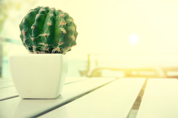 Potted cactus Stock Photo 03