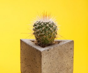 Potted cactus Stock Photo 04