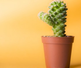 Potted cactus Stock Photo 05