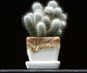 Potted cactus Stock Photo 06