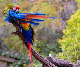 Pretty colorful parrot Stock Photo