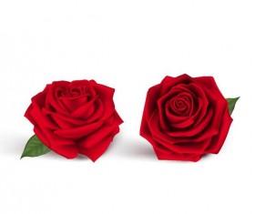 Red rose illustration vector