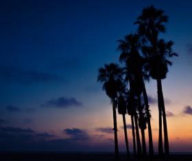 Tall coconut trees under dusk Stock Photo
