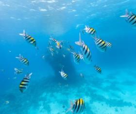 Tropical fish school Stock Photo 01