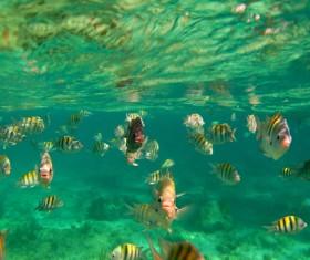 Tropical fish school Stock Photo 04
