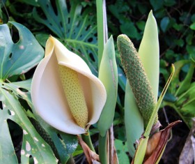 Tropical rainforest flower Stock Photo 03