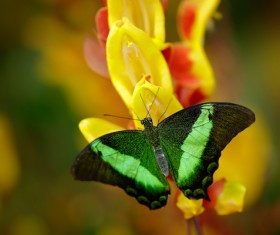 Tropical rainforest flower animal butterfly Stock Photo