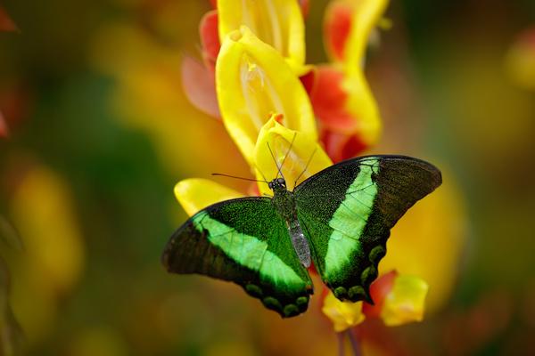 Tropical rainforest flower animal butterfly Stock Photo ...