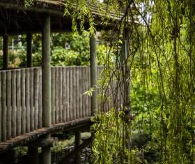 Tropical rainforest landscape Stock Photo 01