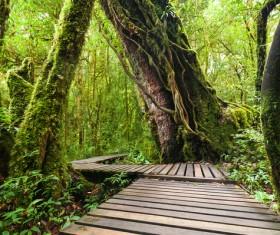 Tropical rainforest landscape Stock Photo 02