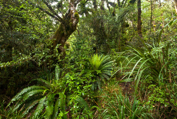 Tropical rainforest plants Stock Photo 01
