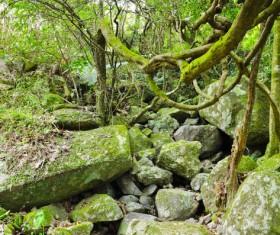 Tropical rainforest plants Stock Photo 02